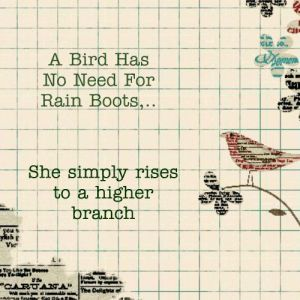 bird has no need for rainboots